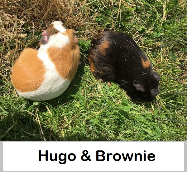 HugoBrownie n